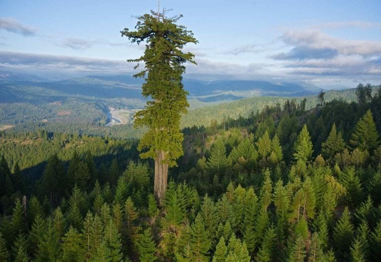 a-grand-tree