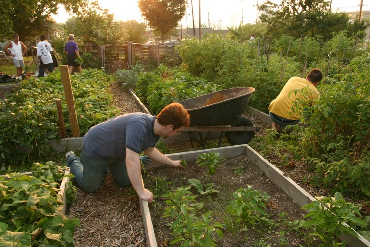 From Floating Food Forests to Vacant Lot Crops, Urban Farming Is Taking Root Across America - Food Is Free Project 2.jpg