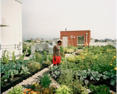 From Floating Food Forests to Vacant Lot Crops, Urban Farming Is Taking Root Across America - Food Is Free Project 4.jpg