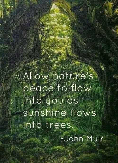 trees muir john nature quotes peace into flows sunshine flow allow natures